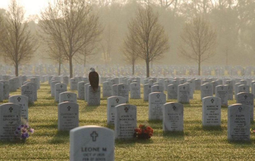 eagle-on-soldiers-grave